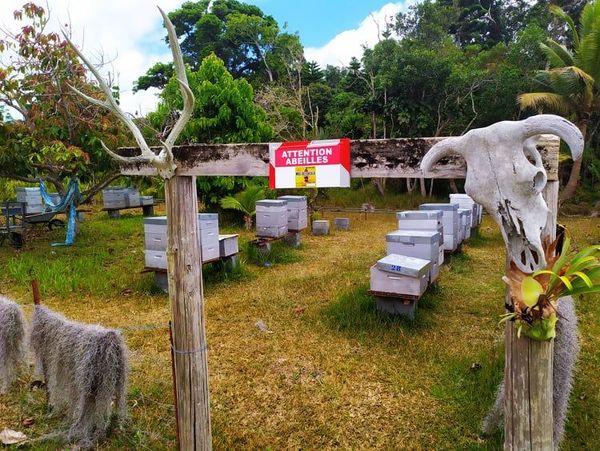 Miel Abeilles ruches Lifou
