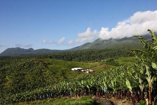 Terre de banane en Guadleoupe