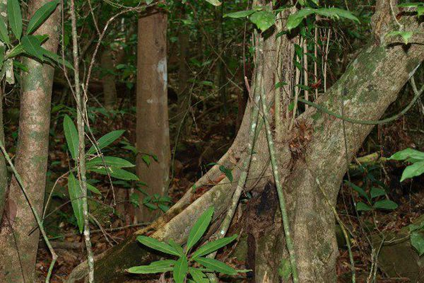 Forêt de Mayotte