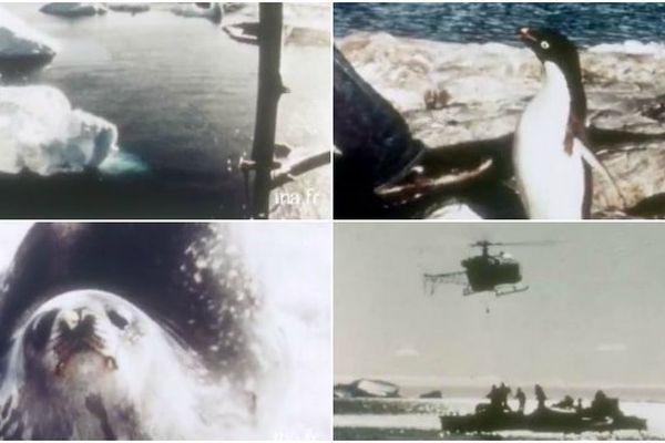 Terre Adélie 1968