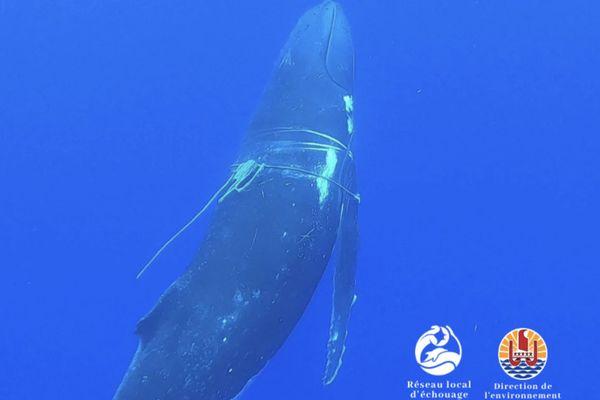 balein cordages
