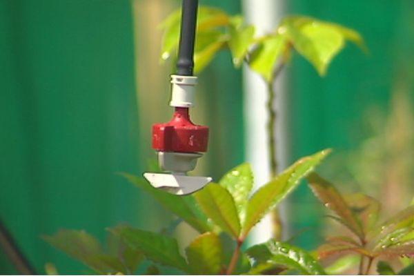 irrigation raisonnée