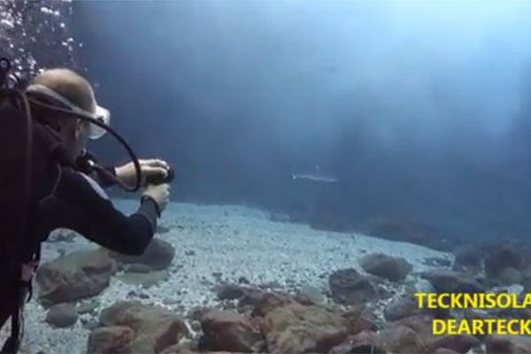 Un nouvel appareil qui éloigne les requins grâce à des ondes électromagnétiques et des rayons UV pulsés