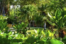 A l'origine, le Jardin d'Eden ne comptait que des cocotiers et des bambous. Aujourd'hui il est peuplé par plus de 600 espèces végétales.
