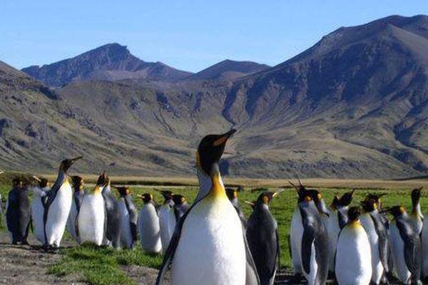 Le+ du 19h : Terres australes au patrimoine de l'Unesco ?