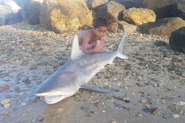 Requin Nouville mai 2021