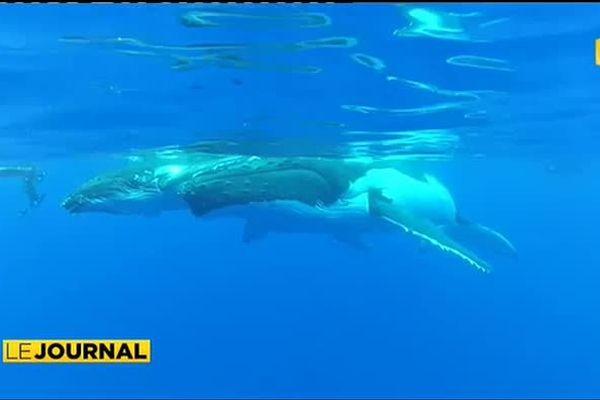 Les baleines ne suffisent plus à séduire les touristes ?