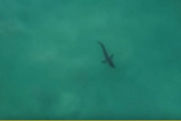 Coronna J-Bay Open : un requin blanc s'invite à la compétition