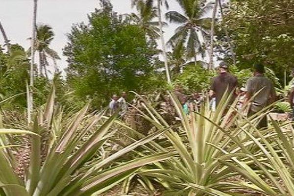 maraîchage et arboriculture fruitière à développer pour créer de la richesse