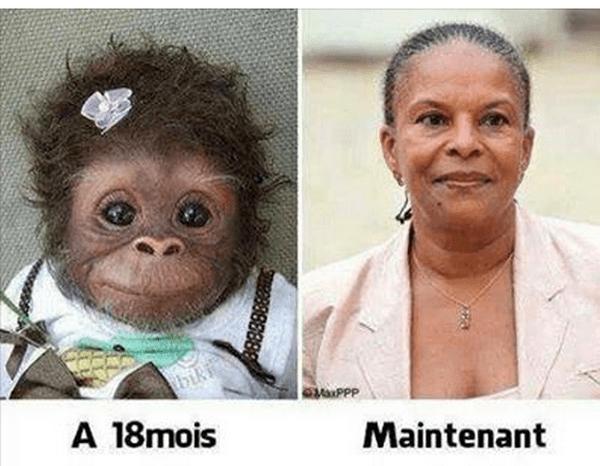 Photomontage Taubira singe