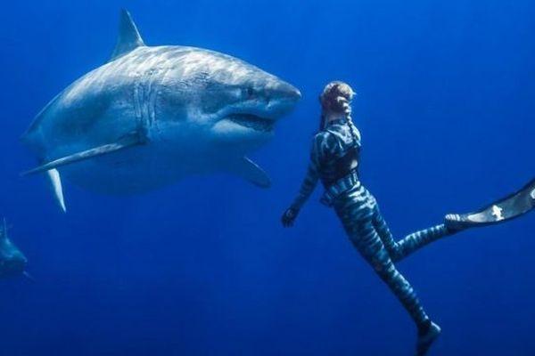 Ocean Ramsey : la plongeuse repousse toujours les limites avec les requins