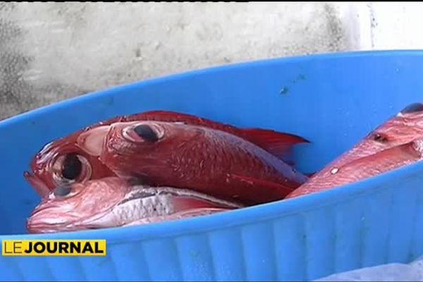 Pêche lagonaire : à Tahiti aussi