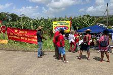 Mobilisation du collectif des ouvriers agricole et de l'association zéro Chlordecone, contre Monsanto-Bayer et l'agrochimie (15 mai 2021 au Lamentin).