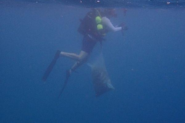 Plongeur lors du ramassage sous-marin de déchets