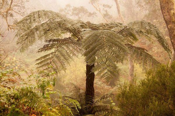 """Fougères arborescente (Parc naturel de La Réunion), l'une des photos lauréates du concours photo """"Wikimédia Loves Earth 2017"""""""