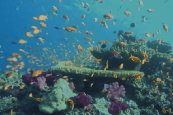Fidji : une loi pour protéger les coraux
