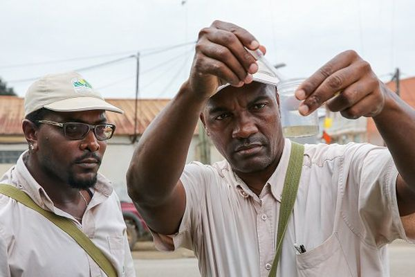 En Guadeloupe, un bilan de la gestion de l'épidémie de Zika en demi-teint