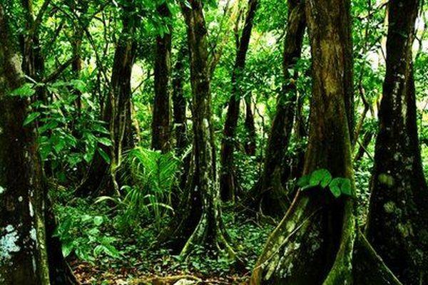 Forêt de Guadeloupe 2