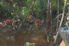 Les traces de passage de clandestins en bordure de l'Iracoubo dans la mangrove