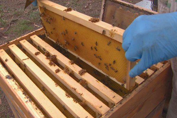 apiculture problème sécheresse