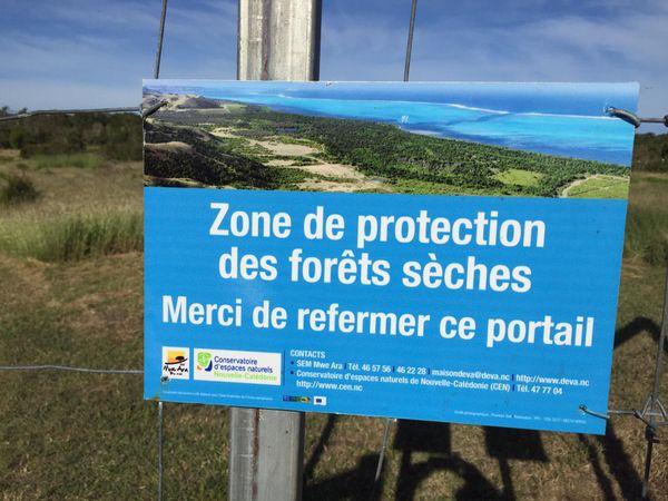 Plantation domaine de Deva Bourail. Caledoclean