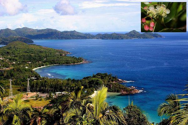 Mahé Seychelles et bois méduse espèce endémique projet de barrage
