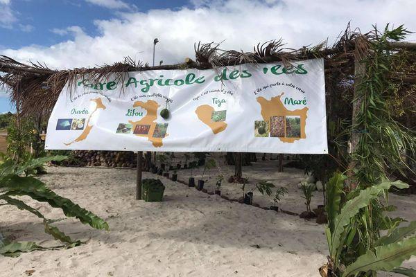 Ouverture officielle de la trentième Foire des îles Loyauté à Maré