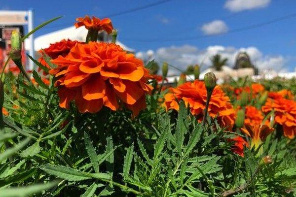Dipavali 2018 : les fleurs 081118