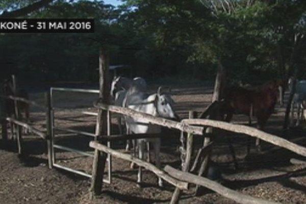 Centre équestre de l'ACNO à Koné