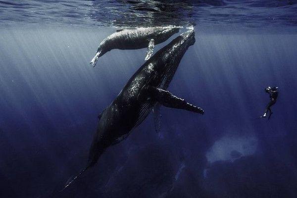 """documentaire Rémy Tézier """"Quand baleines et tortues nous montrent le chemin"""""""