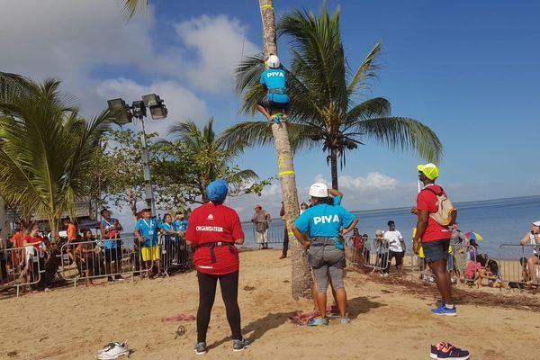 Le grimper de cocotier