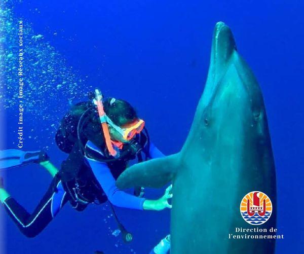 Approcher sans toucher les espèces marines protégées