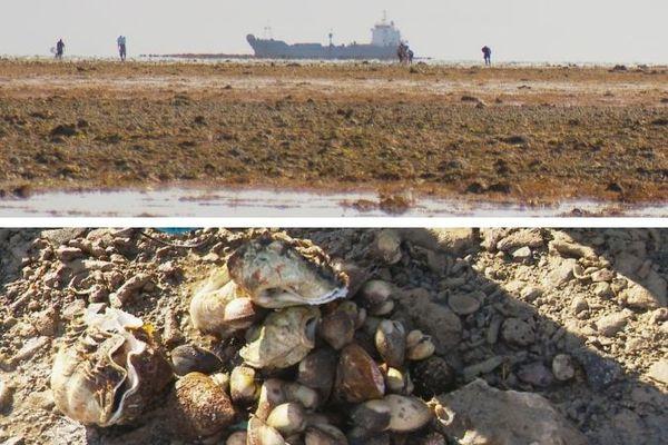 marée basse et coquillages