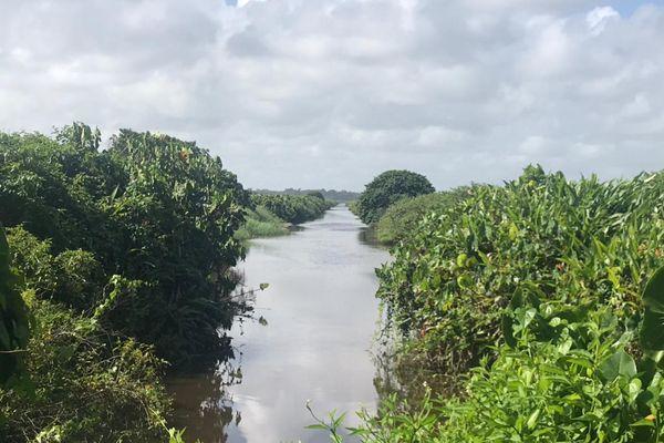 Savane inondée de Mana