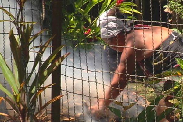 Chikungunya : 59 cas à Tahiti