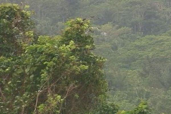 forêt de Wallis