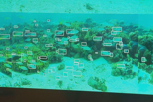 Visioon logiciel échantillonnage poissons