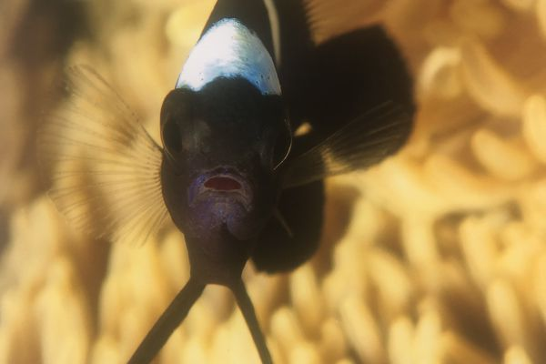 expo photo médipole poisson