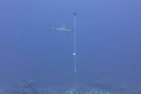 émetteur à requin