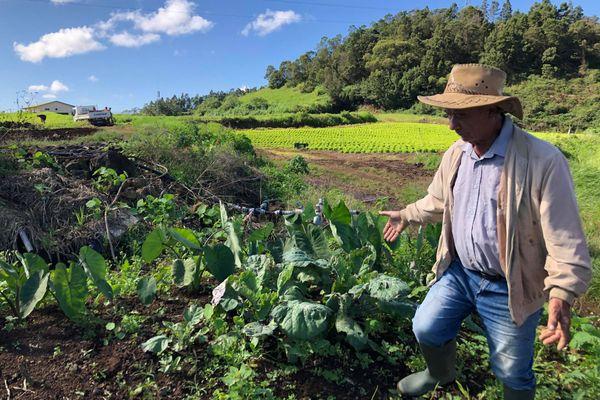 Hubert, 75 ans, agriculteur à la Plaine des Cafres.