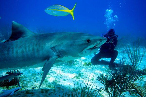 Shark Girl 01