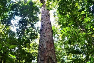 Forêt Amazonie