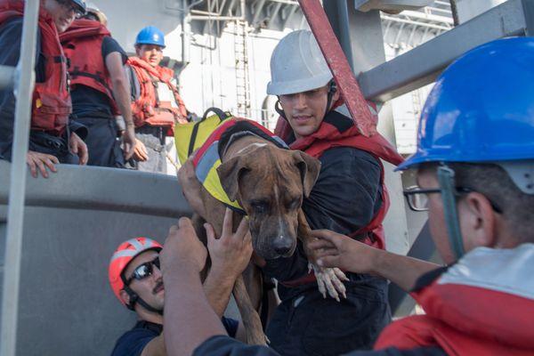 Deux américaines et leurs chiens secourus