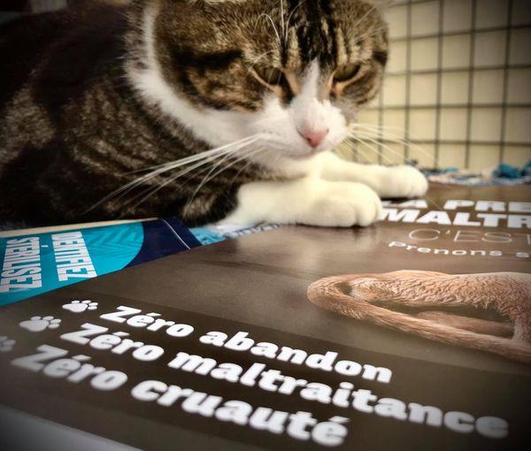 Campagne contre la maltraitance, avec un vrai chat ! 7 septembre 2020, au refuge de la Spanc
