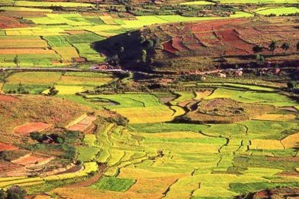 riziere Madagascar