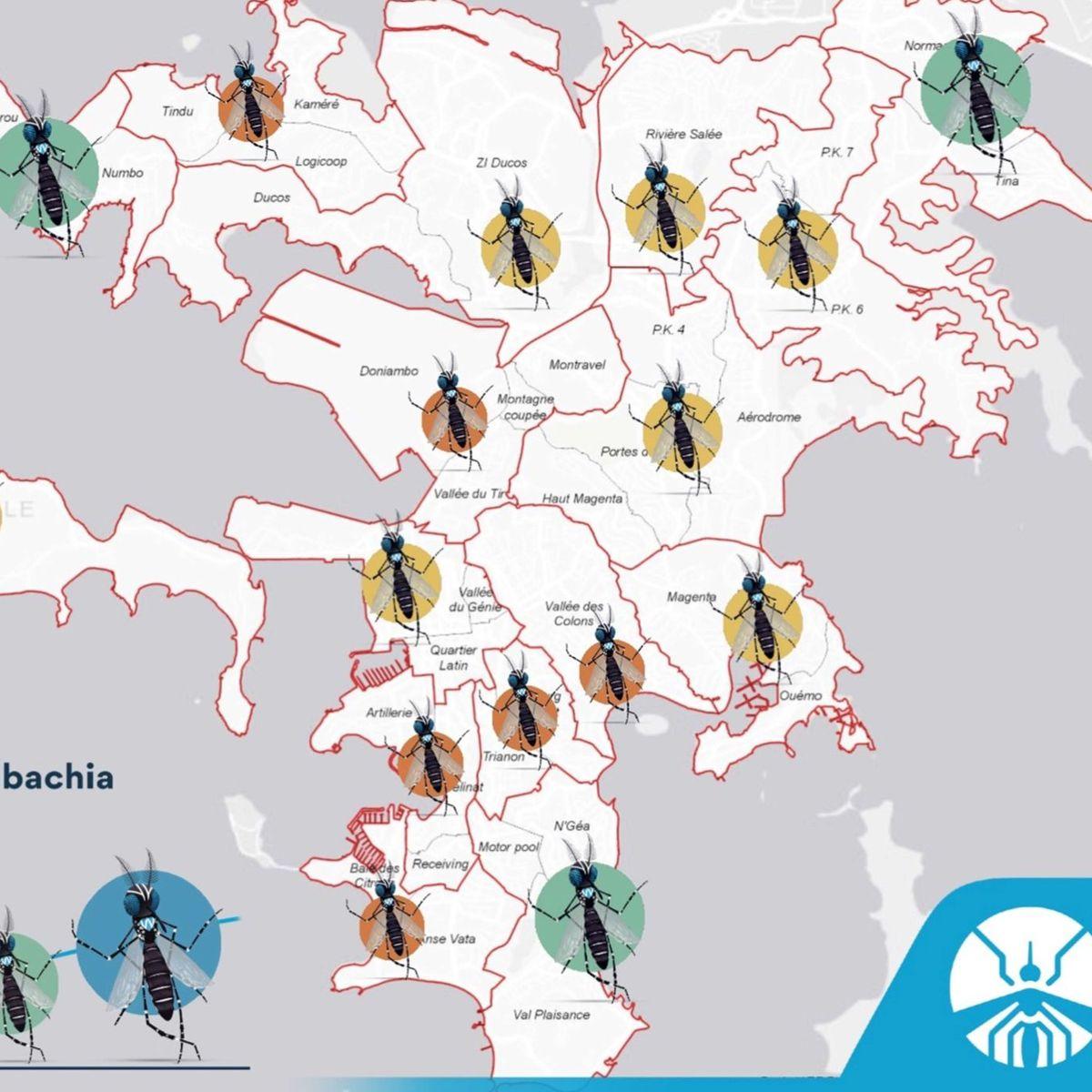 Des moustiques porteurs de wolbachia dans tous les quartiers de Nouméa
