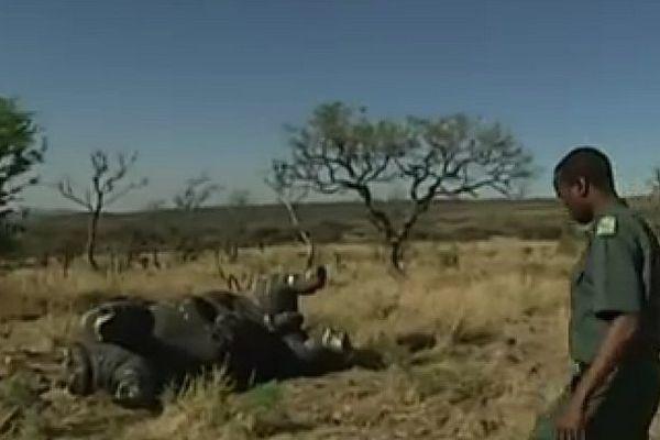 Massacre rhinocéros