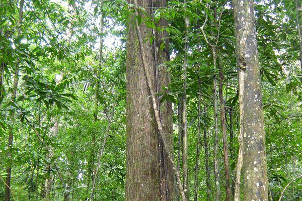 Montagne de Kaw en Guyane