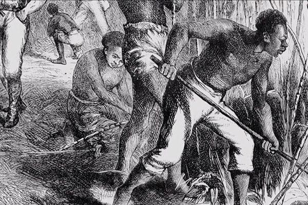 esclave champ
