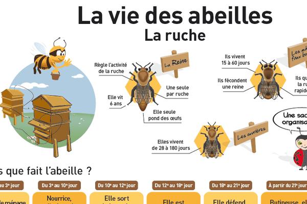 La vie d'une abeille